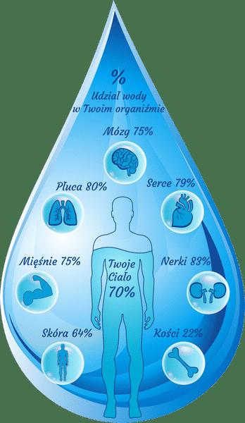 Udział wody w organizmie człowieka - infografika